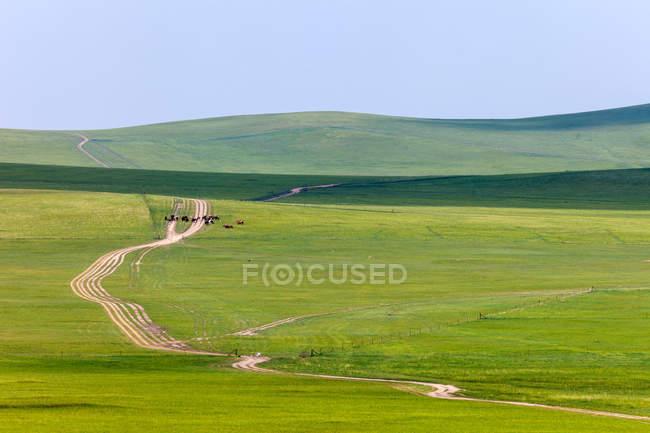 Beau paysage avec des collines vertes et la route sur le pâturage, Mongolie intérieure — Photo de stock