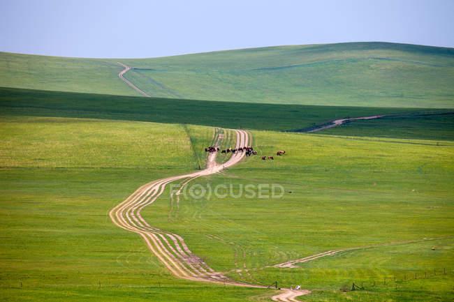 Vista de alto ângulo do rebanho na estrada em terras de pastagem, Mongólia Interior — Fotografia de Stock