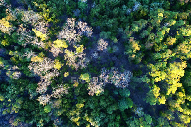 Aerial view of beautiful tall trees in forest during daytime — Stock Photo
