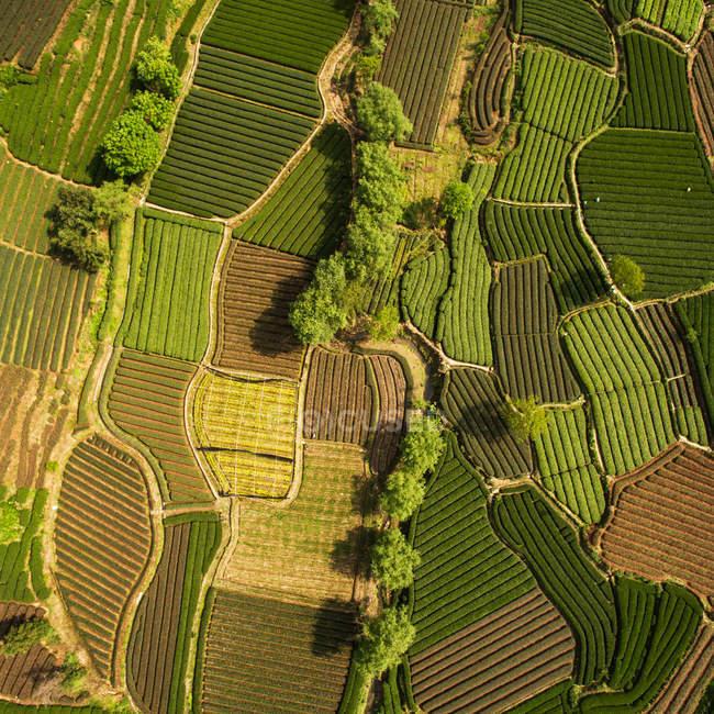 Vista aérea de belos campos agrícolas verdes durante o dia — Fotografia de Stock