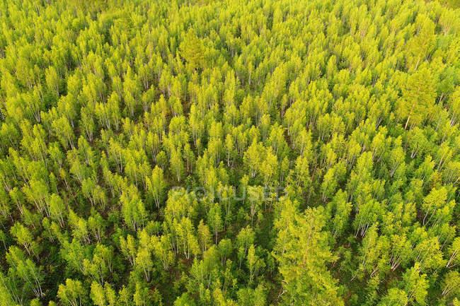 Вид з висоти зелених дерев у прекрасному лісі. — стокове фото