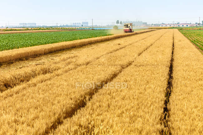 Wheat field and harvesting machine at sunny summer day — Stock Photo