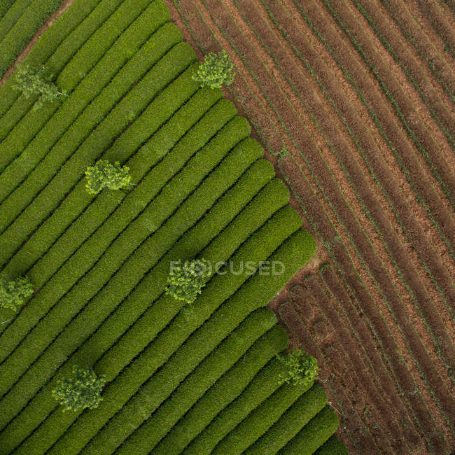 Aerial view of beautiful green agricultural fields during daytime — Stock Photo