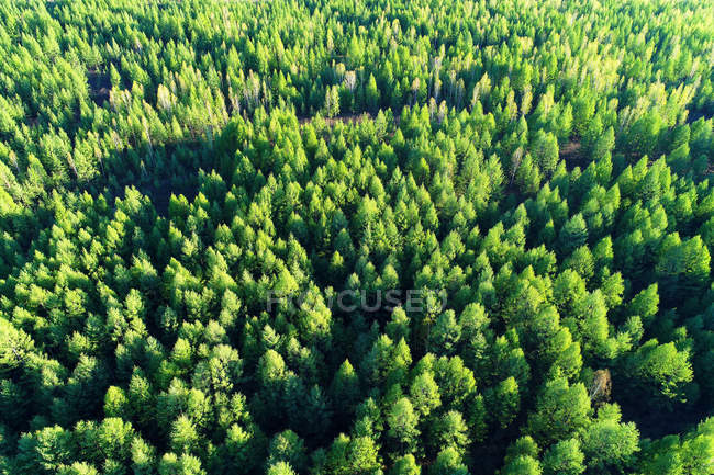 Aerial view of tall green trees in beautiful forest — Stock Photo