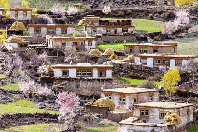 High angle view of houses and blossoming trees in Tibet — Stock Photo