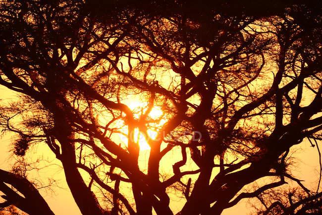 Paysages magnifiques de coucher de soleil avec des arbres au Kenya, Afrique — Photo de stock