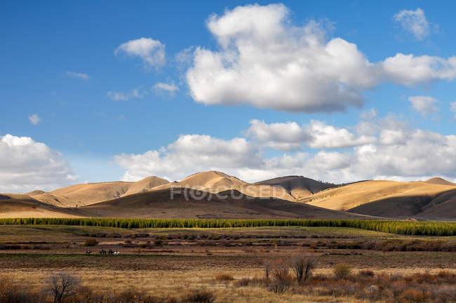 Autunno di Bashang della provincia di Hebei in Cina — Foto stock