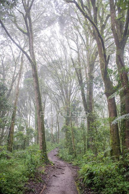 Путь между зелеными деревьями в красивом лесу в туманный день — стоковое фото