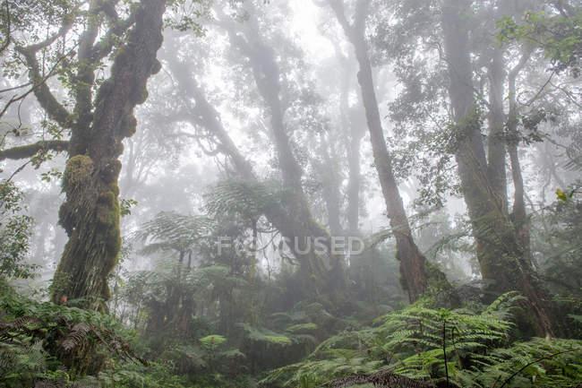 Туман в красивых зеленых тропических лесах утром — стоковое фото