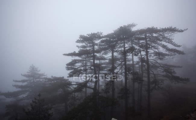 Гора Хуаншань провінції Аньхой, Китай — стокове фото