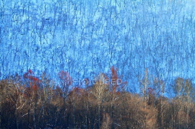 Bellissimo paesaggio invernale nella provincia di Heilongjiang, catena montuosa del Khingan, Cina — Foto stock