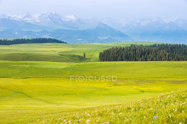 Bela paisagem de primavera com árvores verdes, montanhas cênicas e céu azul — Fotografia de Stock