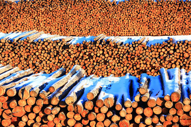 Accumulation of wood on the forest farm of Greater Khingan Range, China — Stock Photo