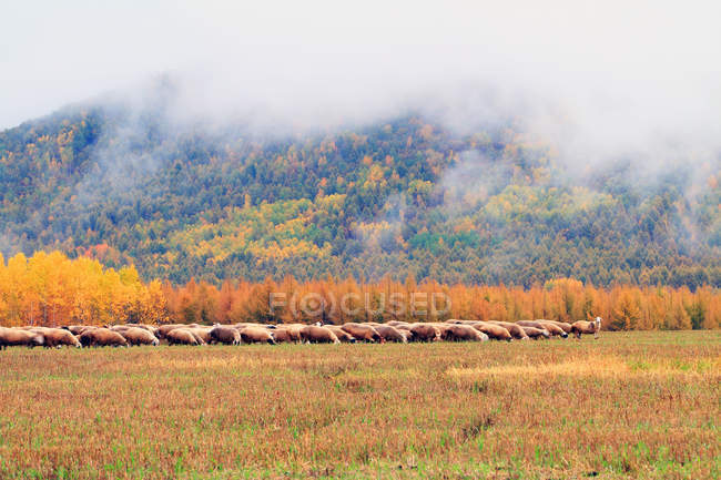 Paisagem Outono incrível na Cordilheira Grande Khingan, província de Heilongjiang, China — Fotografia de Stock