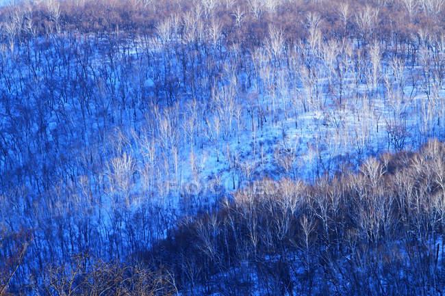 Bellissimo Paesaggio Invernale nella provincia di Heilongjiang, Greater Khingan Range, Cina — Foto stock