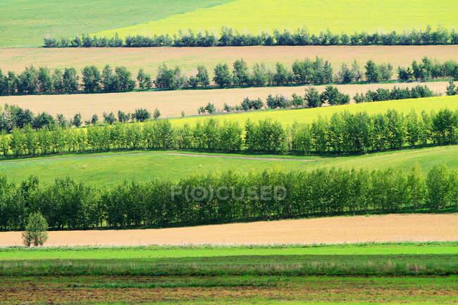 Bela paisagem em Hulun Buir Gramados Mongólia Interior — Fotografia de Stock