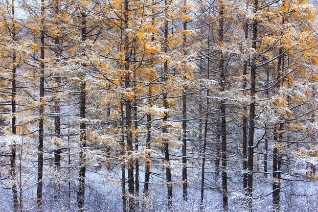 Beautiful Winter Landscape at Greater Khingan Range, Heilongjiang Province, China — Stock Photo