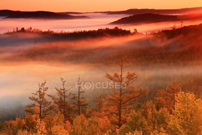 Bela floresta de outono na Grande Cordilheira Khingan, província de Heilongjiang, China — Fotografia de Stock