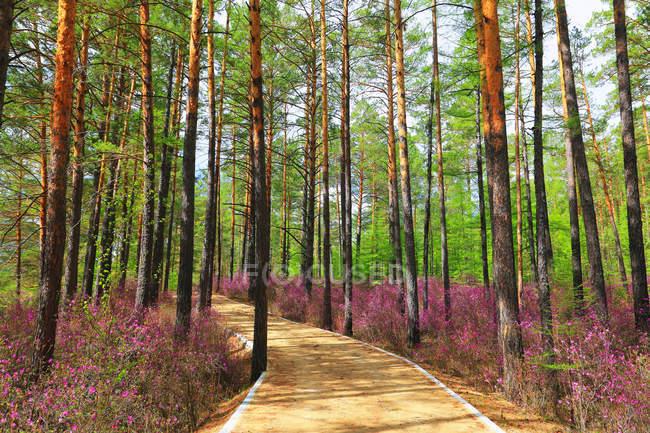 Paesaggio primaverile della Grande Catena Khingan, provincia di Heilongjiang, Cina — Foto stock