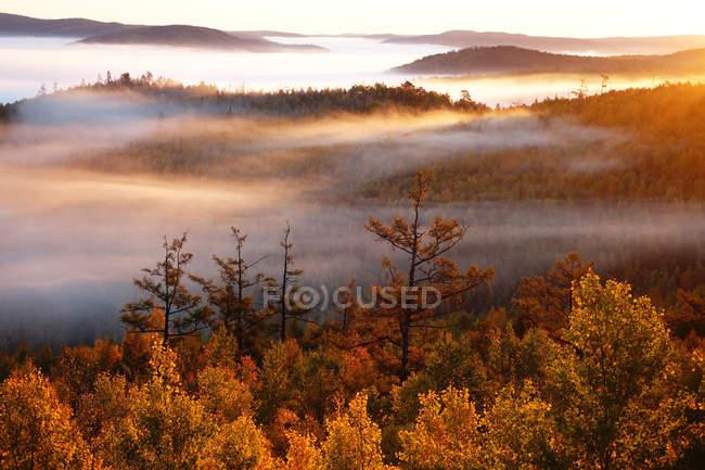 Majestic autumn forest in Greater Khingan Range, Heilongjiang Province, China — Stock Photo