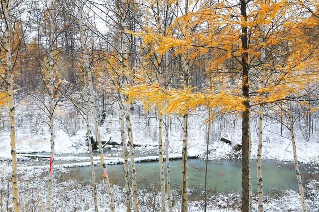 Bela paisagem de inverno na Cordilheira Grande Khingan, província de Heilongjiang, China — Fotografia de Stock