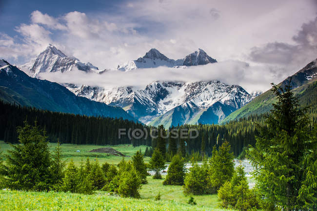 Summer mountain landscape with snow-covered peaks and green trees in valley — Stock Photo