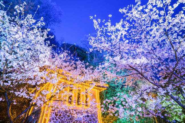 Turtle Head Islet with night view of cherry blossoms, Wuxi, Jiangsu Province, China — Stock Photo