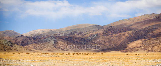 Amazing mountain landscape with herd of wild animals in valley and scenic hills — стокове фото