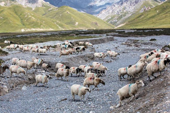 Wunderschöne Landschaft mit Graslandschaften des Kreises Gangcha, Provinz Qinghai, China — Stockfoto