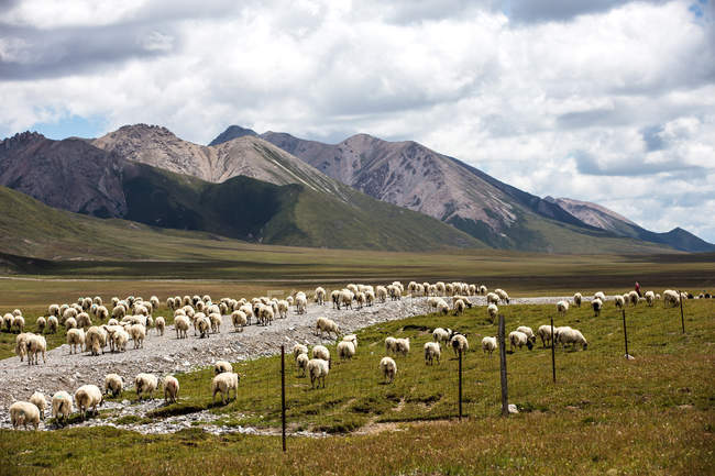 Beau paysage avec le paysage de prairie du comté de Gangcha, province de Qinghai, Chine — Photo de stock