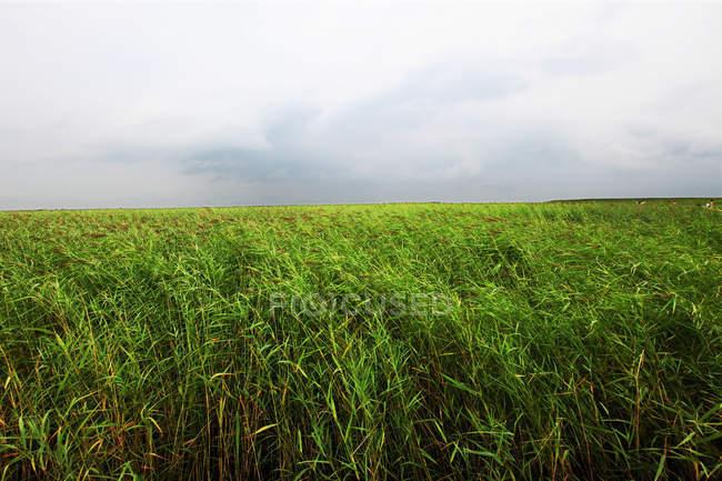 Incrível paisagem na Reserva Natural de Zhalong, província de Heilongjiang, China — Fotografia de Stock