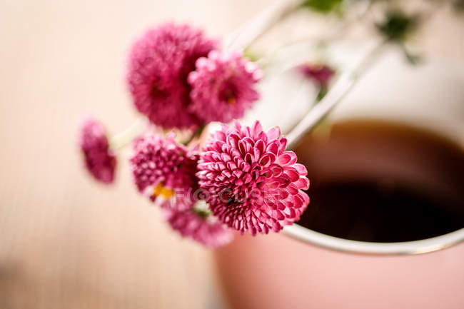 Vue rapprochée des fleurs roses et des tisanes bio saines — Photo de stock