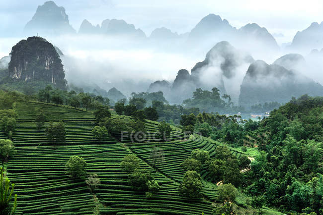 Aerial view of green terraced field, lush vegetation and beautiful mountains at Yingde City, Kowloon, Guangdong Province — Stock Photo