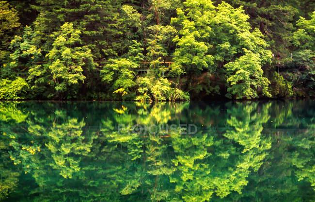 Belle scène naturelle avec la forêt et l'eau calme à la province de Jiuzhaigou, province de Sichuan, Chine — Photo de stock