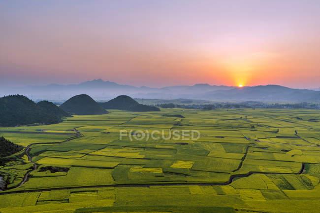 Красивые цветы изнасилования в Luoping Yunnan, Китай — стоковое фото
