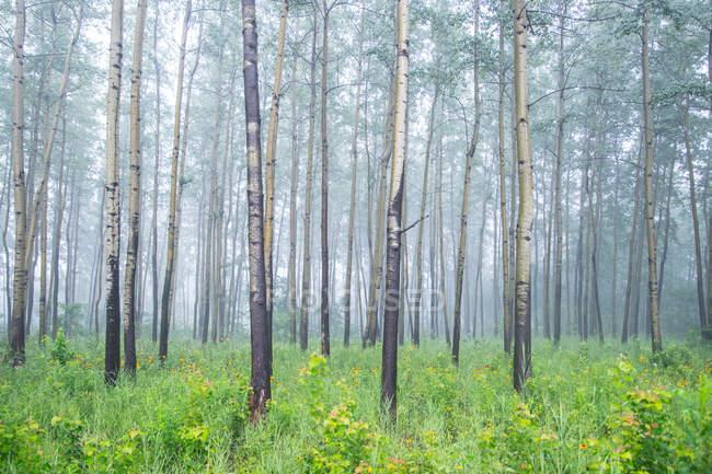 Удивительный лесной ландшафт с австралийскими ветрами в тумане — стоковое фото
