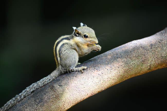 Крупный план милой маленькой скуки на дереве в дикой природе — стоковое фото
