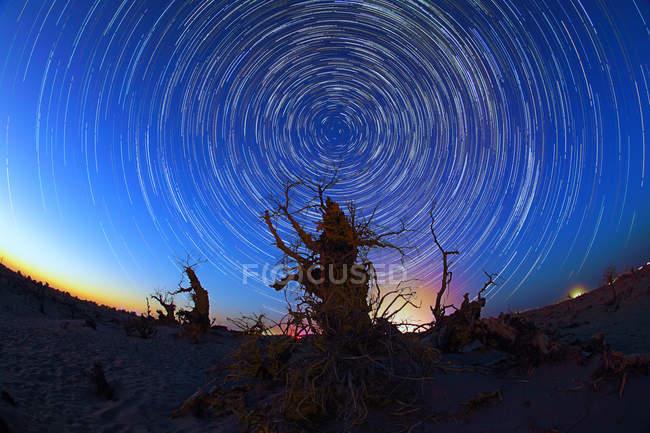 Baixo ângulo vista de árvores nuas contra incrível céu estrelado noite, Ejinaqi, Mongólia Interior, China — Fotografia de Stock
