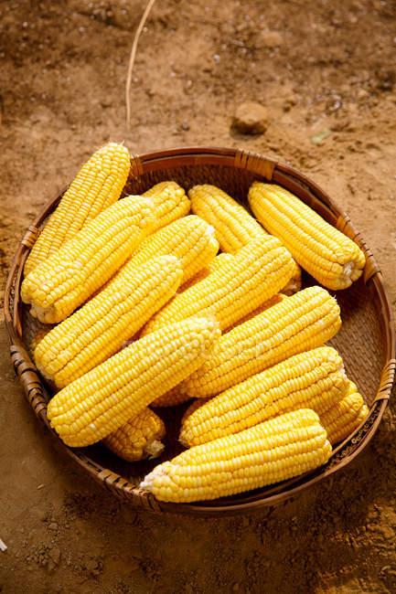 Nahaufnahme frischer reifer gelber Maiskolben — Stockfoto