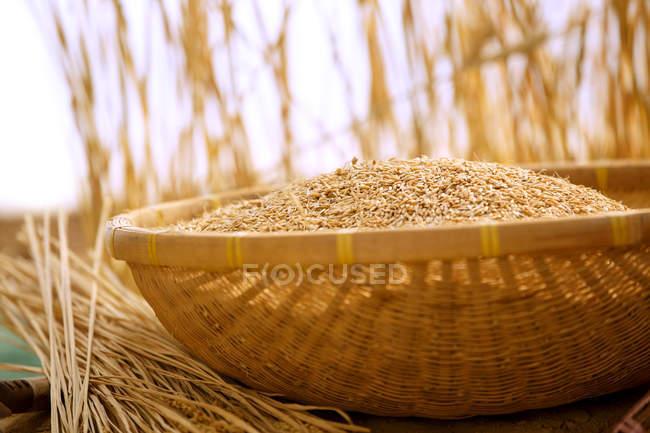 Nahaufnahme von braunem Reis im Weidenkorb, selektiver Fokus — Stockfoto