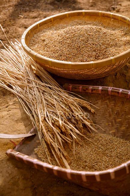 Blick auf trockene Pflanzen und Körbe mit braunem Reis — Stockfoto