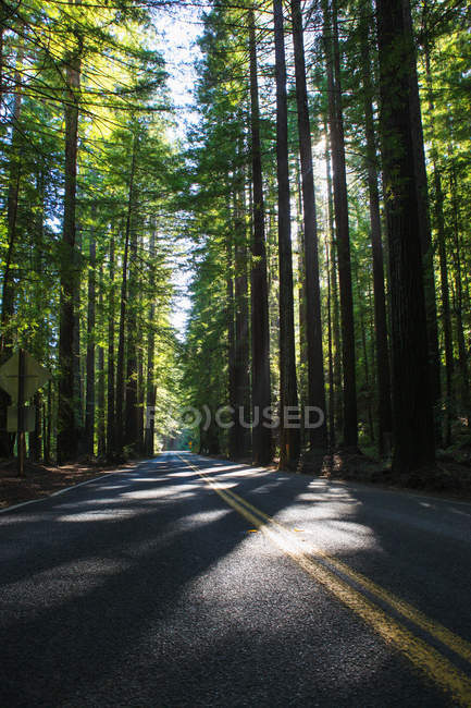 Empty asphalt road in beautiful green forest — Stock Photo