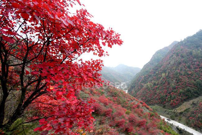 Осенний пейзаж в округе Луши провинции Хэнань, Китай — стоковое фото
