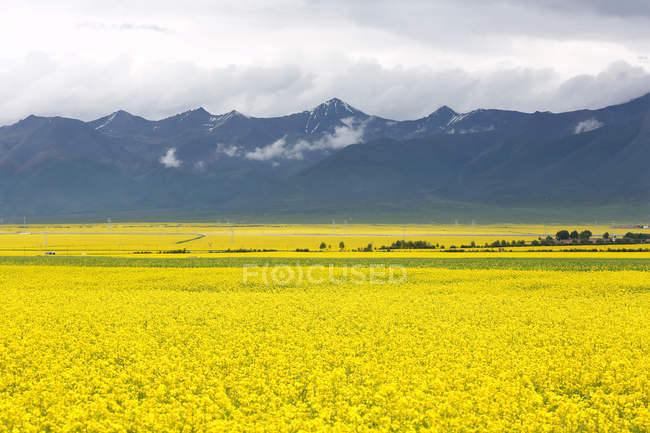 Красива Менюань пастирські пейзажі в провінції Цінхай, Китай — стокове фото