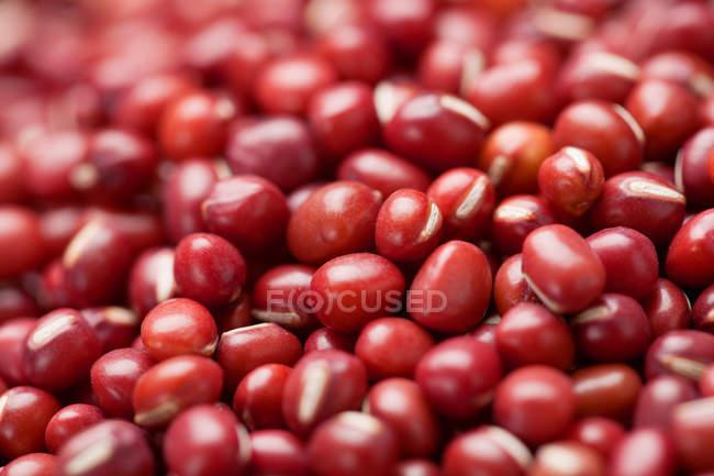 Nahaufnahme roher roter Adzuki-Bohnen in Schüssel — Stockfoto