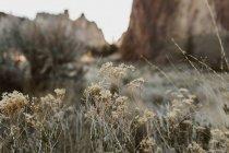 Nahansicht von kleinen weißen Wildblumen und Bergen dahinter, selektiver Fokus — Stockfoto