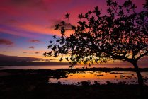 Silhouette of tree near water source at scenic sunset — Stock Photo