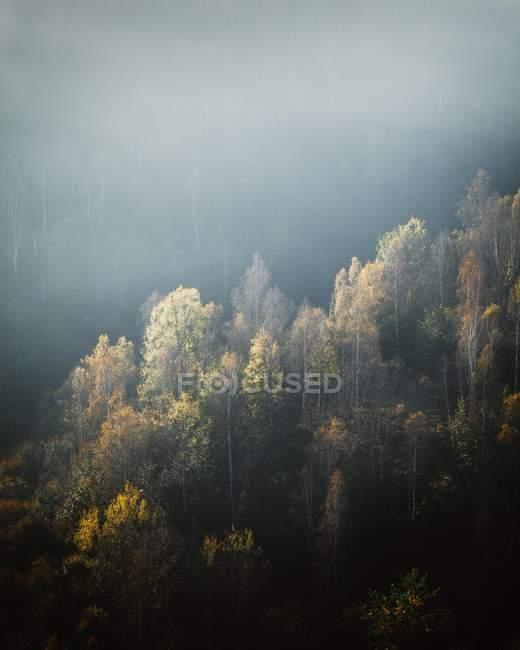 Luftaufnahmen von grünen Bäumen in schönen Wald an nnebeln den Morgen — Stockfoto