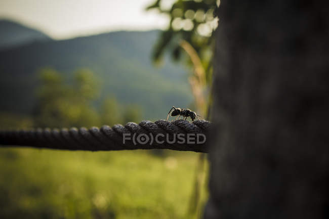 Close-up view of ant crawling on rope outdoor, selective focus — Stockfoto