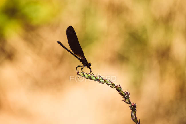 Close-up view of black damselfly on green stem with small wildflowers, selective focus — Stockfoto